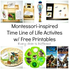 Every Star Is Different: Montessori-inspired Time Line of Life Activities w/ Free Printables