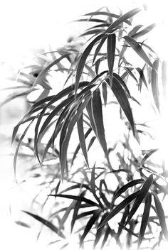 Chusquea Bamboo Foliage Photograph