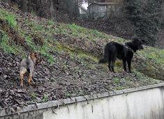 03/01/2016 - Torino con Peja
