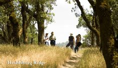 Healdsburg Ridge, dog friendly trail in Healdsburg