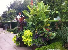 The modern patio is basic concrete pavers. This photo features a grouping of pots with lush tropical plantings. Photo credit: