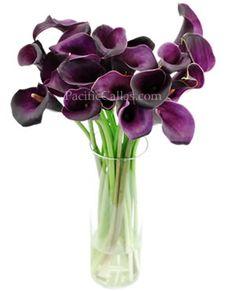 Purple Calla Lily Flowers