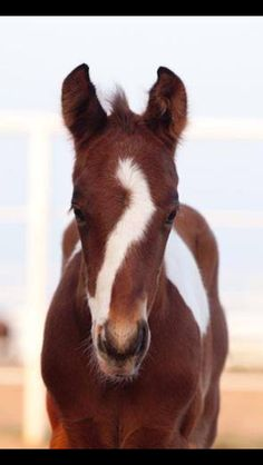 Foals are my favorite