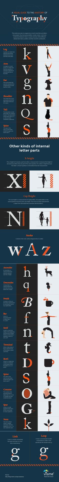 type anatomy A-Visual-Guide-to-the-Anatomy-of-Typography (infographic)