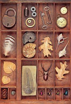Petit Cabinet de Curiosites - (via My Natural History Collection Cabinet Of Curiosities, Natural Curiosities, Curiosity Cabinet, Printers Drawer, Shadow Box Art, Deco Originale, Nature Collection, Nature Table, Assemblage Art