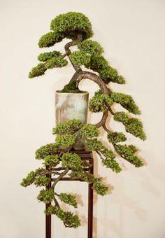 Cascading bonsai display