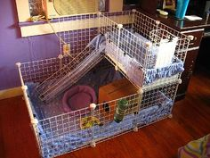 1000 images about guinea pigs on pinterest guinea for Wire guinea pig cages