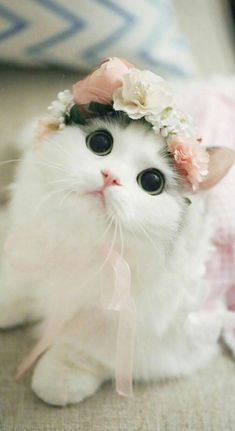 The most adorable th The most adorable thing I have ever seen - Kitties/Puppies - Katzen, Hunde, Tiere Baby Animals Super Cute, Cute Baby Cats, Cute Little Animals, Cute Cats And Kittens, Cute Funny Animals, Kittens Cutest, Cute Dogs, Funny Cats, Black Kittens
