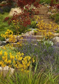 native garden for your inspiration. our favorite natives 3 tips for a high impact australian garden Low Water Landscaping, Hillside Landscaping, Landscaping Ideas, Landscaping Software, Driveway Landscaping, Luxury Landscaping, Australian Native Garden, Australian Plants, Australian Garden Design