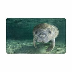 InterestPrint Funny Cute Manatee Wild Animal Doormat Non-Slip Indoor And Outdoor Door Mat Home Decor, Entrance Rug Floor Mats Rubber Backing, Large x >>> Be sure to check out this awesome product. (This is an affiliate link)