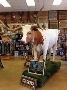 Don't miss this Texas-sized souvenir shop! | http://austinitetips.com