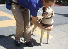 GDB instructor rewards a guide dog for stopping at a curb.