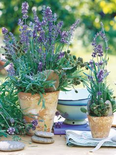 Container Herb Garden: Lavender | jardin d'herbes aromatiques. This is simply gorgeous.