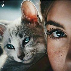 Imagen de cat, eyes, and animal