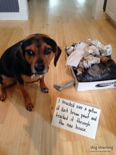 The 15 Cutest Dogs Who DEFINITELY Did Not Deserve This 'Dog Shaming' Nonsense!!! - LittleThings.com