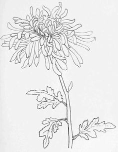 Simple line drawings of flowers a simple flower drawing or chrysanthemum for s birth month simple . simple line drawings Line Drawing Tattoos, Flower Line Drawings, Simple Line Drawings, Flower Sketches, Ink Drawings, Easy Drawings, Drawing Flowers, Horse Drawings, Art Sketches