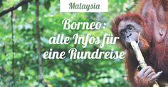 Borneo: Wo startet man am besten? Welche Nationalparks gib es? Wie kommt man hin? Braucht man für alles eine Tour? Eine Karte & alle Infos zusammengefasst
