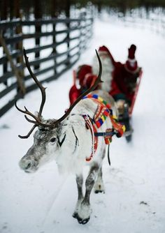 joulupukki!  Santa Claus rides a reindeer and sled outside Rovaniemi, Finnish Lapland on December 15, 2011.   AFP PHOTO/JONATHAN NACKSTRAND (Photo credit should read JONATHAN NACKSTRAND/AFP/Getty Images) Photo: Jonathan Nackstrand, AFP/Getty Images / SF
