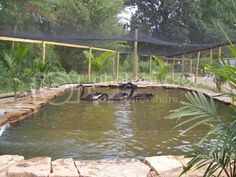 Duck Pond/pool pictures | Page 52 | BackYard Chickens - Learn How to Raise Chickens Backyard Ducks, Backyard Farming, Chickens Backyard, Duck Enclosure, Duck Pens, Duck Farming, Duck Coop, Raising Ducks, Duck House