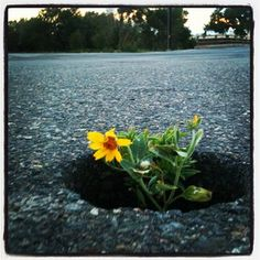 Life in the strangest places #nature #urban #cityscapes #flowers