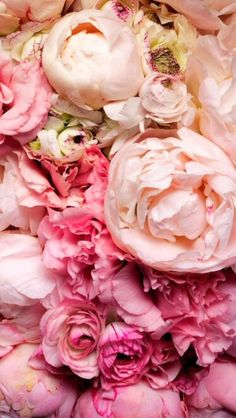 Pink Peonies iPhone wallpaper