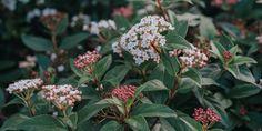 10 ανθεκτικά φυτά για μπαλκόνι | Τα Μυστικά του Κήπου Vegetable Garden Design, My Secret Garden, Urban Farming, Edible Garden, Herb Garden, Agriculture, Farmer, Herbs, Flowers