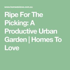 Ripe For The Picking: A Productive Urban Garden | Homes To Love