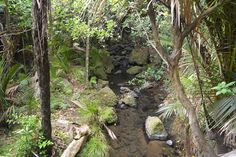 I love the fact that where ever you are in New Zealand you& never more than a few minutes away from the bush! This is particularly true in West Auckland. Great Places, Places To Go, Beautiful Places, Auckland New Zealand, Stuff To Do, Things To Do, Fall, Beach, Plants