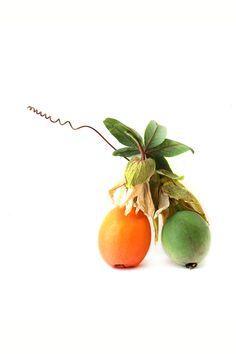 passion fruit   STILL (mary jo hoffman)