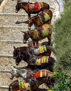 Santorini donkey transport #greece #santorini #greekislands #travel #travelphotography