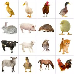 Grid of pictures to memorize – farm animals - Nutztiere Farm Animals Pictures, Animal Pictures For Kids, Farm Pictures, Animal Crafts For Kids, Animals For Kids, Autism Activities, Animal Activities, Montessori Activities, Animal Games