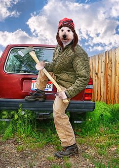 Lumberjack dog: | 50 Completely Unexplainable Stock Photos No One Will Ever Use