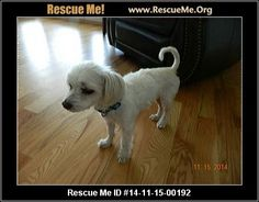 escue Me ID: 14-11-15-00192Charlie (male)  Maltese  Age: Adult  Compatibility:Good with Most Dogs, Good with Kids and Adults Personality:Average Energy, Very Submissive Health:Neutered, Vaccinations Current, Malnourished  Charlie is a playful, very loving dog. He is precious. He enjoys playing with toys with an owner. He likes for one to throw a toy and he will fetch it. He is trained to go outside or use pee pads, but he prefers the outside. He was well carried for, until his…