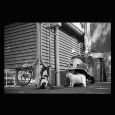 https://flic.kr/p/uzvKL3 | Cats May 2015  #cat #smallcats #blackandwhitephotography