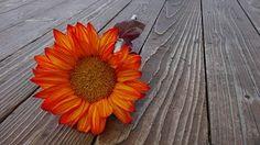 Sunflower, Autumn, Flower, Bloom, Floral