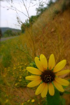 Side of road Flower. Taken by Tracie-Ruth Kriete