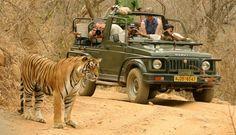 Book your golden triangle tour package with tiger safari tours. Enticing Tour offers golden triangle tour with tiger safari at very affordable prices. Wildlife Safari, Jungle Safari, Safari Jeep, Catamaran, Location Guadeloupe, Forest Resort, India Tour, Adventure Tours, India Travel