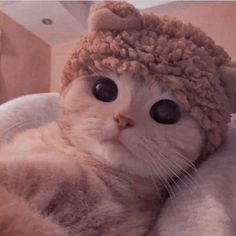 Cute Baby Cats, Cute Little Animals, Cute Cats And Kittens, Cute Funny Animals, I Love Cats, Kittens Cutest, Wallpaper Gatos, Cute Cat Wallpaper, Cute Animal Photos