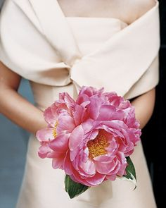 Large and lush Coral Charm peonies