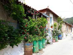Garden in my village