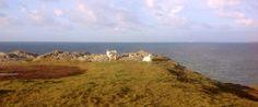 Mountain goats - Trearddur Bay, Anglesey