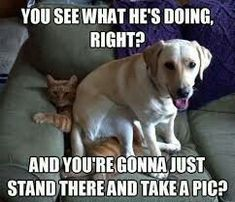That looks just like my cat and dog