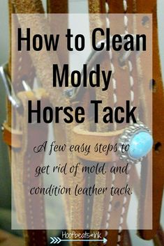 Rainy weather can cause mold on leather horse tack. Keep your leather saddle and bridle clean and conditioned in these 5 easy steps. How to clean moldy horse tack via Hoofbeats and Ink.
