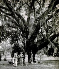 """""""At Wild Heron, the oldest plantation in Savannah, owned by Shelby Myrick, the boys and girls had more cocktails under this old oak tree, with hanging moss. Myrick likes to tell how the deed to this plantation was stolen by the Yankees in 1864."""" - LIFE Magazine, September 22, 1941.    awesome."""