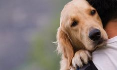 While it may be obvious if your dog runs in the opposite direction that she is afraid, dogs have many less obvious signs of fear. You can help ensure your dog doesn't get to the point where they want to … Emotional Support Animal, Dog Died, Cockerspaniel, Can Dogs Eat, Dog Facts, Survival Life, Survival Stuff, Survival Prepping, Dog Runs