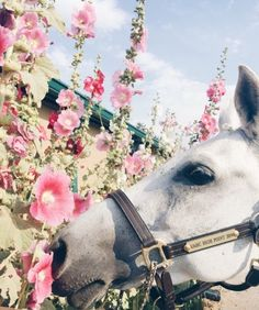 - Art Of Equitation Cute Horses, Pretty Horses, Horse Love, Beautiful Horse Pictures, Beautiful Horses, Beautiful Flowers, Animals And Pets, Cute Animals, Paint Horse
