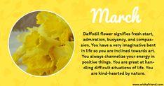 March Birth Flower Daffodil March Birth Sign, Meaning Of March, March Birth Flowers, Most Popular Flowers, Flower Meanings, Daffodil Flower, Language Of Flowers, Types Of Flowers, Flowering Trees