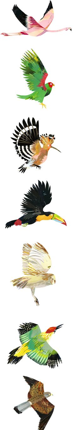 Collage/Paper cut birds illustrations by Kate Slater