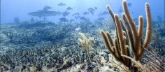 """Plant a Fish. Fabien Cousteau talking about ocean conservation in the digital age @FCousteau - """"Mission Blue, Google Ocean, Plant-a-Fish are grassroots tools that help us connect with the ocean."""""""