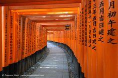 orange walkway in japan | Torii tunnel path in Fushimi Inari-taisha shrine Kyoto Japan temple